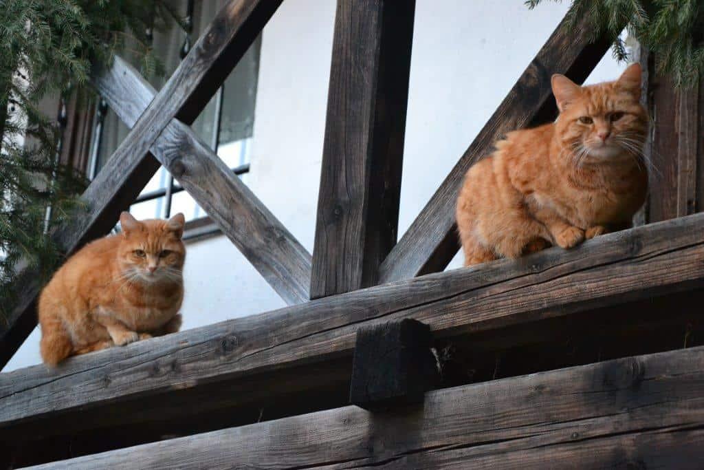 Schlumpfi + Garfield