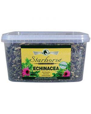 Starhorse Echinacea